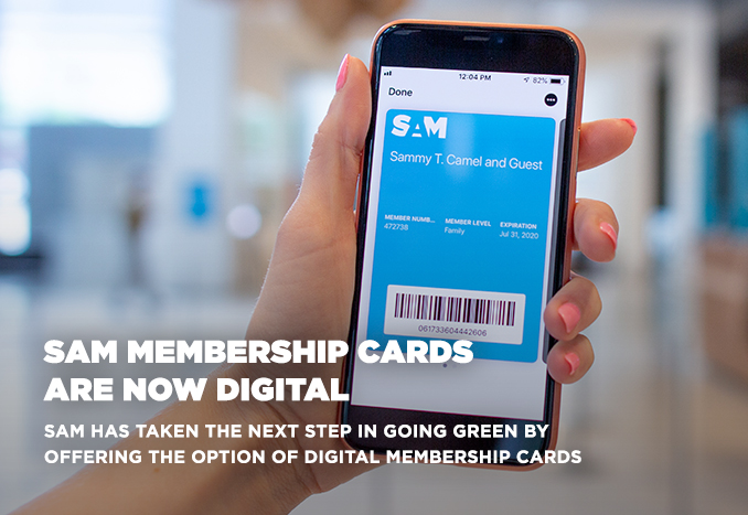 Image of a hand holding a phone displaying a digital membership card